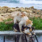 海辺で浮気する猫。