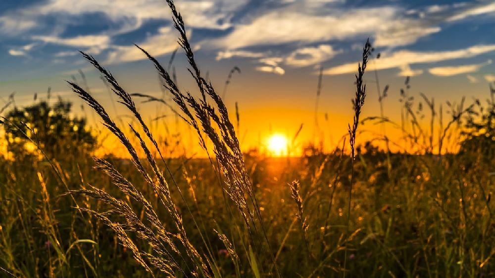 夏の草原と夕方の空